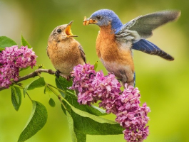 two birds on a flower